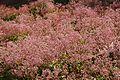 Pretoria Botanical Gardens-009.jpg