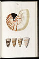 Prodromus in systema historicum testaceorum Tafel 02.jpg