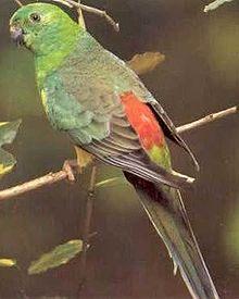 Нектар мало кто применяет в качестве корма для попугаев, однако высокую...