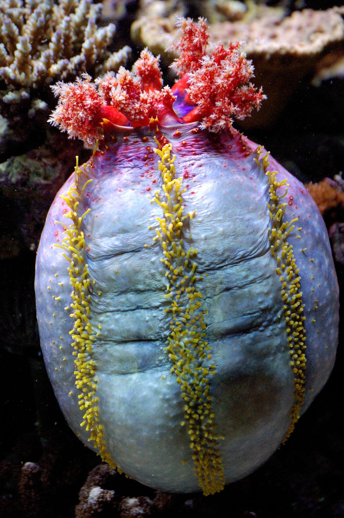 terre aquarium