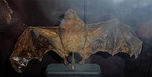 List of recently extinct mammals - Wikipedia, the free encyclopedia