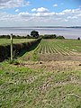 Public Footpath to the Humber Bank - geograph.org.uk - 308656.jpg