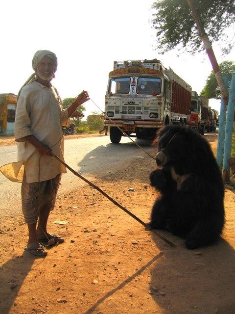 Pushkar-bear and handler