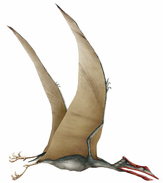 University of Jordan - The world's only discovered fossil bones of the Arambourgiania pterosaur (discovered in Russeifa in 1943) are stored in the University of Jordan.