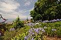 Quinta das Vinhas ^ Cottages, Estreito da Calheta, Madeira, Portugal, 27 June 2011 - Main house area - panoramio (21).jpg