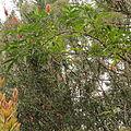 Quitos botaniska trädgård-IMG 9195.JPG