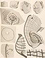 Résultats du voyage du S.Y. Belgica en 1897-1898-1899 - sous le commandement de A. de Gerlache de Gomery. Rapports scientifiques publiés aux frais du gouvernement belge, sous la direction de la (14764002325).jpg