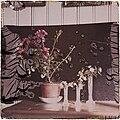 Rød potteplante og hvitveis i vann på et bord (autochrome) (14761573271).jpg
