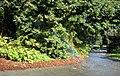 Rainbow in San Francisco Botanical Garden (26972).jpg