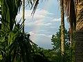 Rainbow through the Forest.jpg