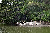 Ranganathittu Bird Sanctuary 23.jpg