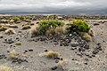 Rangipo Desert 09.jpg