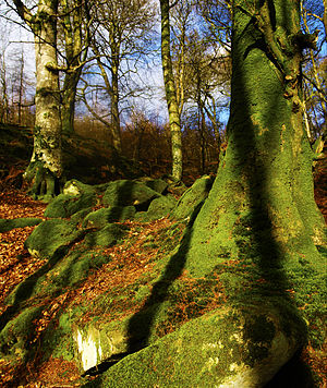 Ravensdale, County Louth - Ravensdale