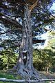 Redwood Memorial Grove 14 2017-06-12.jpg
