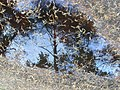 Reflection in a Puddle - geograph.org.uk - 598060.jpg