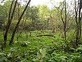 Rezerwat Bobry w Uhercach 03.jpg