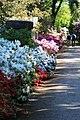Rhododendronpark Bremen 20090513 006.JPG
