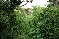 Rhossili Community, overgrown footpath - geograph.org.uk - 185410.jpg