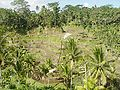 Rice terrace of Tegallalan 200507-3.jpg
