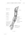 Richer - Anatomie artistique, 2 p. 66.png