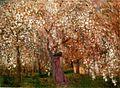 Rippl Sour Cherry Tree in Blossom 1909.jpg