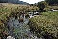 River Piquillo 01 by-dpc.jpg