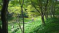 Rokko alpine botanical garden13s2816.jpg