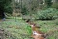 Rombergpark-100330-11301-Brücke.jpg