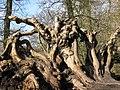 Root Sculpture - geograph.org.uk - 1187100.jpg