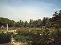 Rosaleda del Parque del Oeste (Madrid) 11.jpg