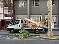 Rue de La Part-Dieu (Lyon) élagage des arbres (2).jpg