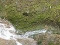Ruisseau de Loverchy @ Parc du Val Vert @ Seynod (50884058078).jpg