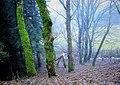 Ruscelletti e fiocchi di neve, Foreste Casentinesi, Camaldoli.jpg