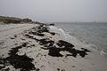 Rushy Point, Tresco - geograph.org.uk - 815148.jpg