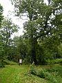 Rusowo, park pałacowy, 2 poł. XIX 01.jpg