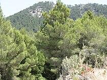 Sa Talaia-peak.jpg