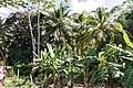 Samaná Province, Dominican Republic - panoramio (59).jpg