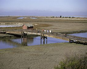 San Francisco Bay National Wildlife Refuge.jpg