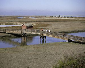 Don Edwards San Francisco Bay National Wildlife Refuge - Image: San Francisco Bay National Wildlife Refuge