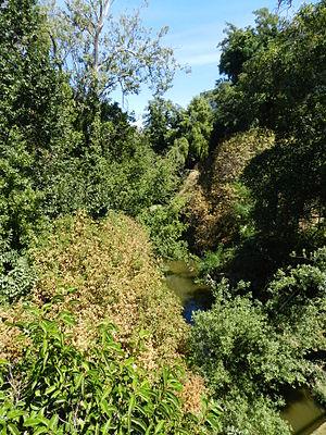 San Lorenzo Creek - Creek and foliage, downtown Hayward