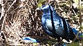 Satin Bower Bird Male seducing Female into his Bower (15810582535).jpg