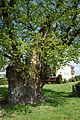 Schleswig-Holstein, Rellingen, Naturdenkmal 11-02 NIK 3110.JPG
