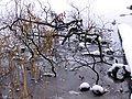 Schlossgarten Eutin 2.jpg