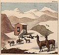 Schmidtmeyer- Scharf, George Johann - A hut in the mountains with snow and guanacos -JCB Library f1.0.jpg