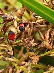 hajnal krm floralizinnel s pikkelysmrrel hogyan lehet eltávolítani a szem körüli vörös foltokat