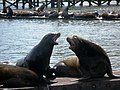 Sea lions (Astoria, Oregon).jpg