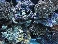 Seattle Aquarium, exhibit, April 2012.JPG