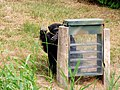 Second male chimpanzee using enrichment box.jpg