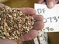 Seeds (4582146625).jpg