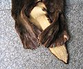 Seeotterfell Hinterpfoten - Sea otter fur-skin, back paws.jpg